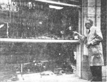 De 74-jarige wapenhandelaar Felix Becks van de Botermarkt toont ons de stukgeslagen etalage langswaar de dief een revolver wegnam (uit: Jonge man slaat etalage van wapenhandel in te Hasselt (1965))